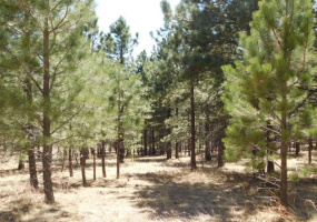 Lot 20 Phase 2 off Loggers Mill Way, Black Lake, New Mexico 87710, ,Lots/land,For Sale,Phase 2 off Loggers Mill Way,86225