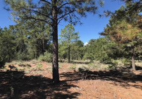 TBD FSR493 Tract A, Lama, New Mexico 87556, ,Lots/land,For Sale,Tract A,107299