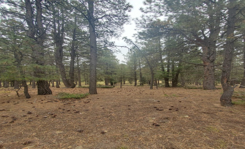 Lot 1230 Quivera Rd, Angel Fire, New Mexico 87710, ,Lots/land,For Sale,Quivera Rd,107817